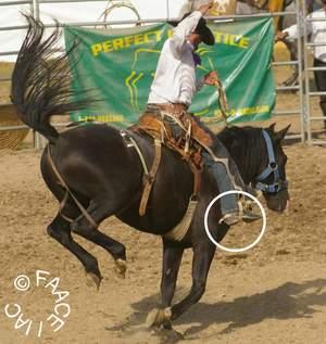 frau wichst pferd
